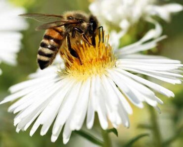 Clover Honey vs. Wildflower Honey: How Are They Different?