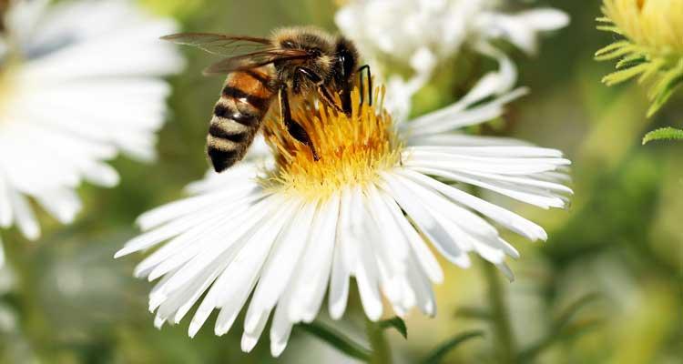 clover honey vs wildflower honey