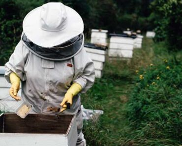 New Zealand Honey Types: Discover 10 Exciting Varieties