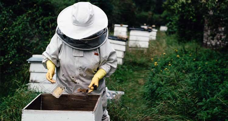New Zealand Honey Varieties